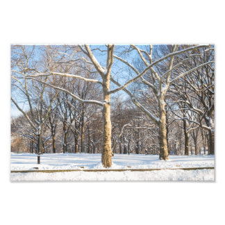 Sycamores and Snow Art Photo