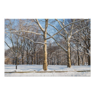 Sycamores and Snow Poster
