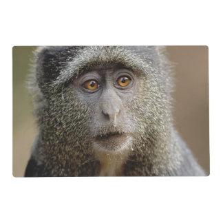 Sykes or Blue Monkey, Cercopithecus mitis, Placemat