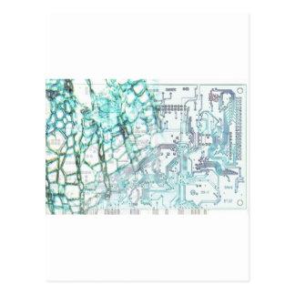 symbiosis - concept postcards