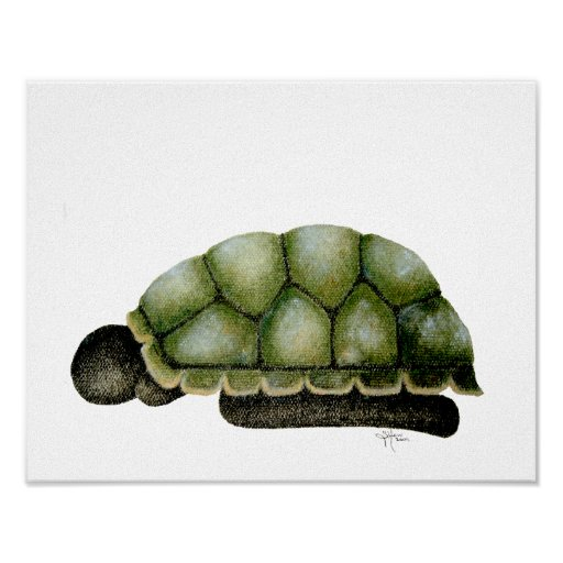 Symbiosis Turtle Poster