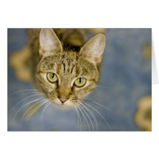 Sympathetic cats help ease the pain over pet loss card