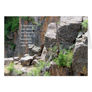 Sympathy: Black Canyon Tree Card