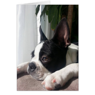 Sympathy boston terrier greeting card