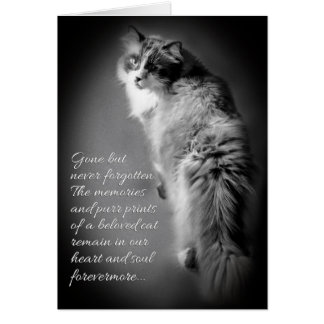 Sympathy card for cat loss