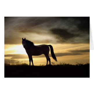 Sympathy Card for Loss of Horse Greeting Cards