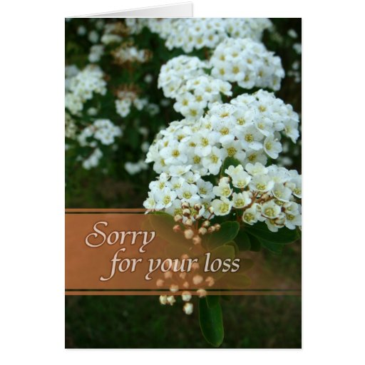 how to say sorry for loss