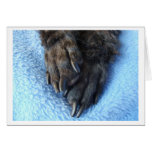 Sympathy For Loss Of Pet Poodle Paws Card