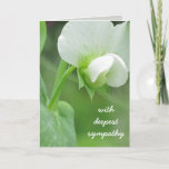 "Sympathy Greeting Card customizable template<br><div class=""desc"">This is a customizable template card which allows you to add or change text, add or change images, and select your size, font color, etc. The design begins with an origianal photograph of a fresh spring peas blossom. Spring gardens promise a new tomorrow A fresh peaceful design perfect to send...</div>"