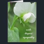 """Sympathy Greeting Card customizable template<br><div class=""""desc"""">This is a customizable template card which allows you to add or change text, add or change images, and select your size, font color, etc. The design begins with an origianal photograph of a fresh spring peas blossom. Spring gardens promise a new tomorrow A fresh peaceful design perfect to send...</div>"""