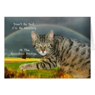 Sympathy - Loss of Pet Tabby Cat Greeting Card