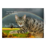 Sympathy - Loss of Pet Tabby Cat Greeting Cards