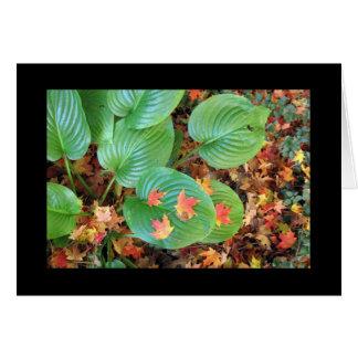Sympathy - Maple leaves on Hosta Card