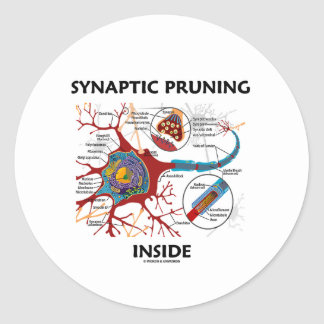Synaptic Pruning Inside Neuron Synapse Geek Humor Classic Round Sticker