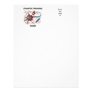 Synaptic Pruning Inside Neuron Synapse Neurology Letterhead