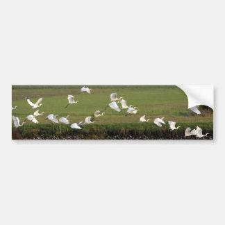 Synchronic flying of Great Egrets. Bumper Sticker