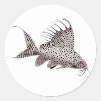 Synodontis Catfish Sticker