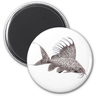 Synodontis eupterus Catfish Magnet