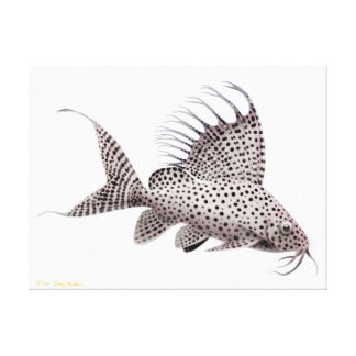 Synodontis Eupterus Catfish Wrapped Canvas