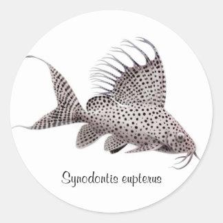Synodontis eupterus classic round sticker
