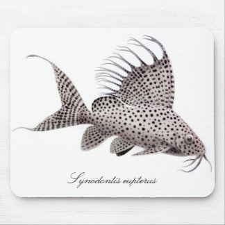 Synodontis eupterus mouse pads