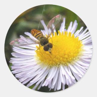 Syrphid en el pegatina del Wildflower