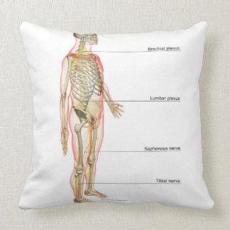 System 3 nervioso cojín