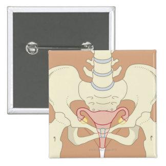 System 3 reproductivo femenino pin cuadrado