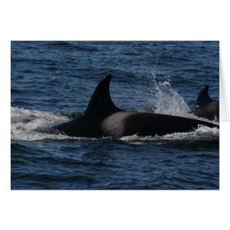 T00/orca transitoria tarjeta de felicitación