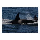 T00/orca transitoria tarjetas