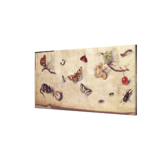T31566 A Study of Various Insects, Fruit and Anima Canvas Print