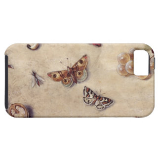 T31566 A Study of Various Insects, Fruit and Anima iPhone 5 Cases