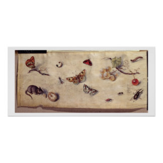 T31566 A Study of Various Insects, Fruit and Anima Print