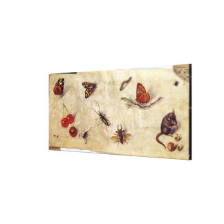 T31567 A Study of Various Insects, Fruit and Anima Gallery Wrap Canvas