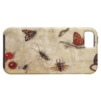 T31567 A Study of Various Insects, Fruit and Anima iPhone 5 Cases