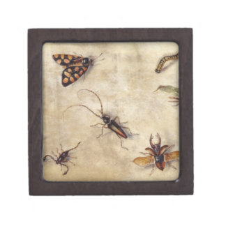 T31567 A Study of Various Insects, Fruit and Anima Jewelry Box