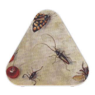 T31567 A Study of Various Insects, Fruit and Anima Speaker