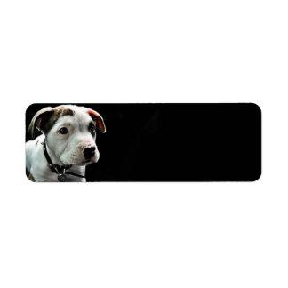 T-Hueso del pitbull del perrito Etiqueta De Remitente