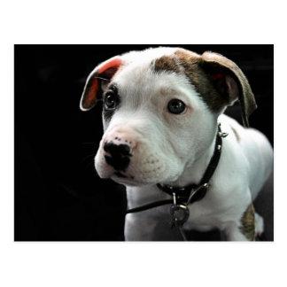 T-Hueso del pitbull del perrito Postales