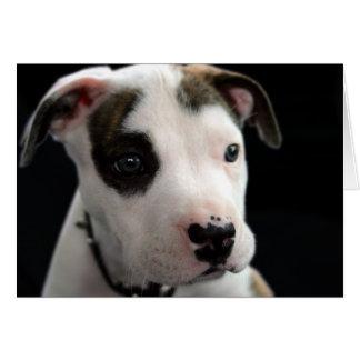 T-Hueso del pitbull del perrito Tarjeta De Felicitación