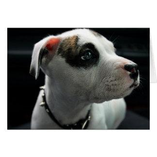T-Hueso del pitbull del perrito Tarjeta Pequeña
