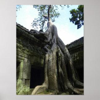 TA Prohm, Camboya Impresiones