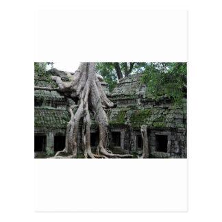 ta prohm temple  in cambodia postcard