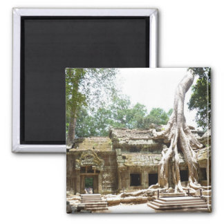 ta prohm tree magnet
