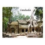 ta prohm tree postcard