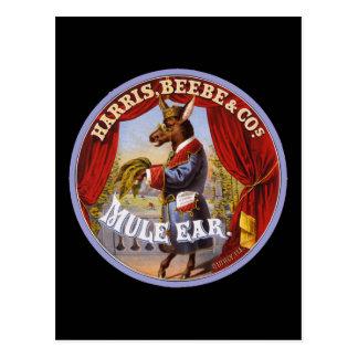 Tabaco del oído de la mula postal