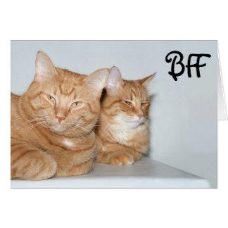 Tabbies anaranjados BFF Tarjetas