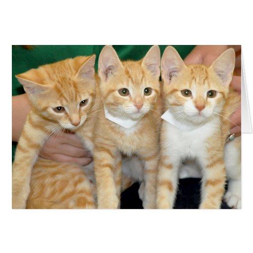 Tabbies/gatitos que saludan/tarjetas de nota anara
