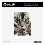 tabby-114782_1280.jpg skins para iPod touch 4G