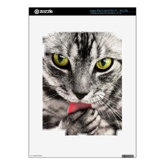 tabby-114782 tabby cat close up portrait feline an iPad 3 decals